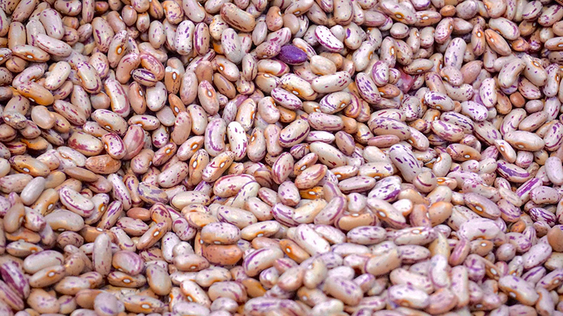 11 Types Of Beans For Gout Sufferers (All You Need To Know)