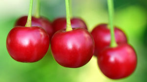 cherries are great for gout sufferers