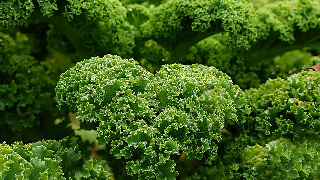 kale and gout