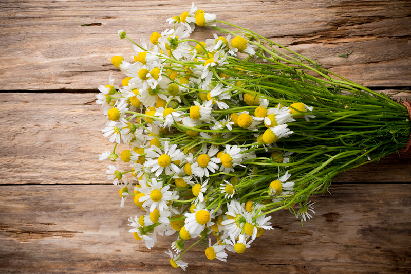 Gout and Chamomile