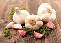 garlic and gout