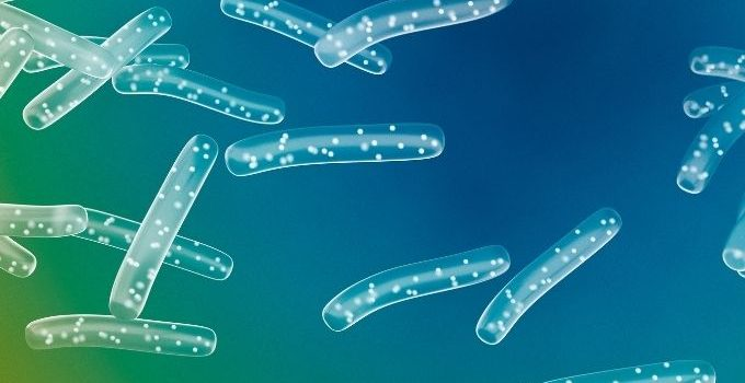 Probiotics and Gout